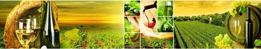 Скинали — Виноград и вино на фоне виноградных плантаций