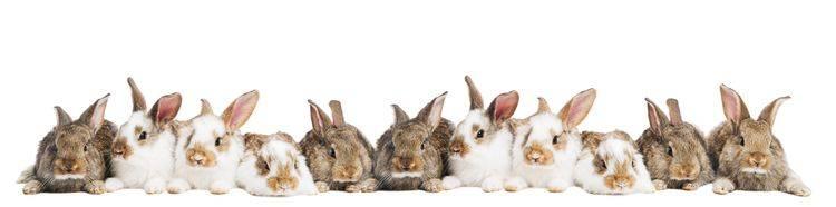 Скинали — Милые крольчата