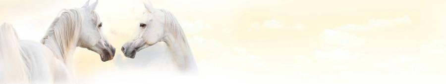 Скинали — Лошади белой масти