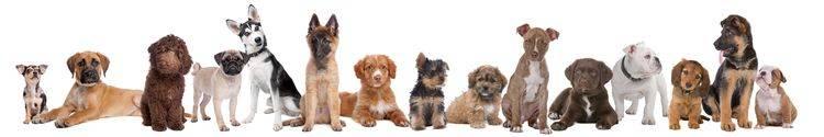 Скинали — Милые собаки
