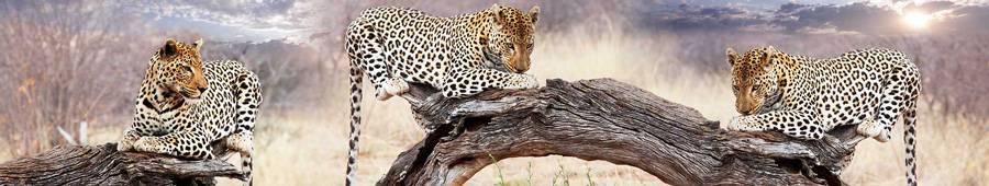 Скинали — Леопард