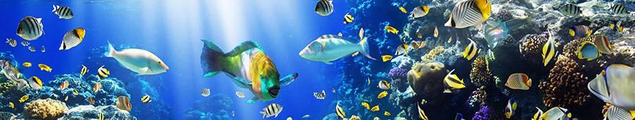 Скинали — Разноцветные рыбки в воде