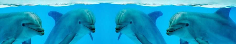 Скинали — Дельфины