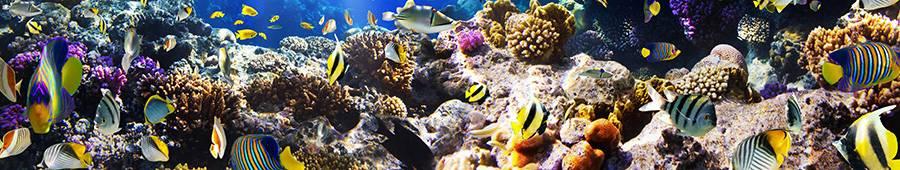 Скинали — Кораллы