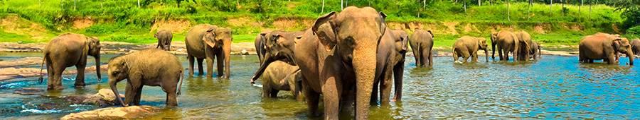 Скинали — Слоны у водоема